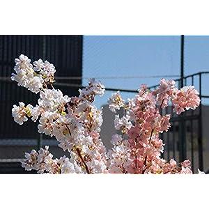 Ahvoler Artificial Cherry Blossom Branches Flowers Stems Silk Tall Fake Flower Arrangements Home Wedding Decoration,39 Inch 4