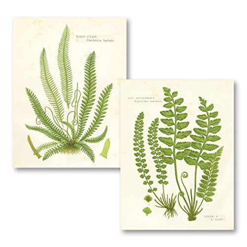Gango Home Decor Vintage Fern I & II by Gwendolyn Babbitt (Printed on Paper); Two 16x20in Fine Art Paper Giclee Prints