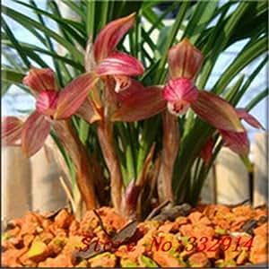 Venta caliente de la venta! 100pcs / bag raras Semillas chinas Cymbidum 20 variedades Semillas Bonsai jardín de flores de las plantas innovadoras contra la radiación