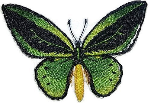 Custom and Unique Amazing Colorful Butterflies[ Common green Birdwing ] Embroidered Iron On/Sew patch [4.2
