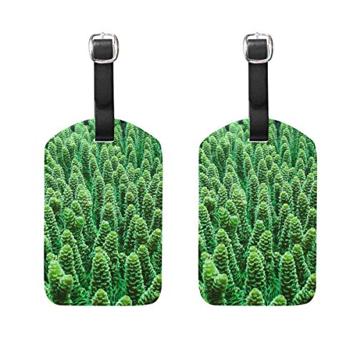 Luggage Tags Green Coral Reefs Mens Tag Holder Kids Bag Labels Traveling Accessories 2 Piece