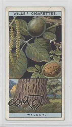 (Common Walnut Ungraded COMC Poor (Trading Card) 1924 Wills Flowering Trees & Shrubs - Tobacco [Base] #45)