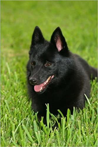 The Schipperke Dog Journal: 150 page lined notebook/diary