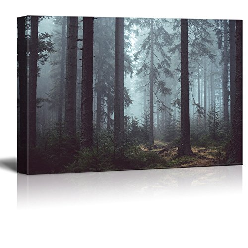 Pine Forest in the Mist Gallery