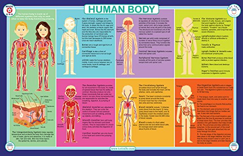 Tot Talk Human Body Educational Placemat for Kids, Washable and Long-Lasting