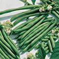 Kentucky Blue Pole Green Beans 102 seeds