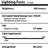 Vintage Edison Bulbs - NEW 100% SHATTERPROOF