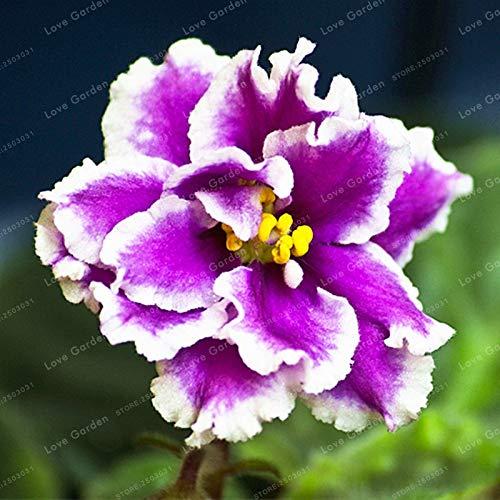 MAPPLEGREEN 100 PCS Saintpaulia Ionantha Bonsai Beautiful Plant Bonsai Flower Bonsai African Violet Bonsai DIY Home Garden Plants 8