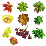 CEWOR 10pcs Artificial Succulents Different Kinds for Plants Wall Decoration DIY Materials