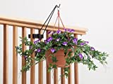 Railing Mount and Hanging Basket Hook