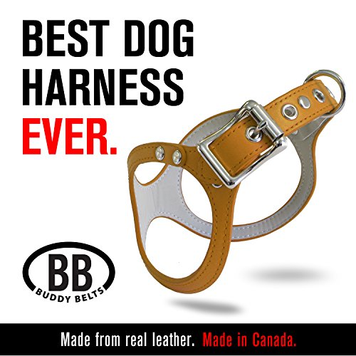 ORIGINAL DURABLE Buddy Belt Classic LEATHER Dog Harness For