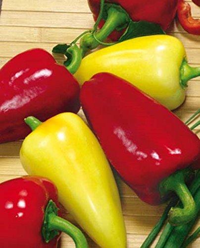 Seeds Sweet Pepper Bell White&Red Vegetable Organic Russian - Pepper Organic Red Bell Sweet