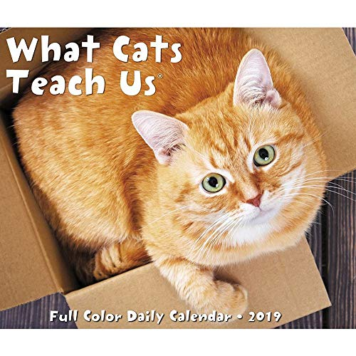 What Cats Teach Us 2019 Box Calendar by Willow Creek Press