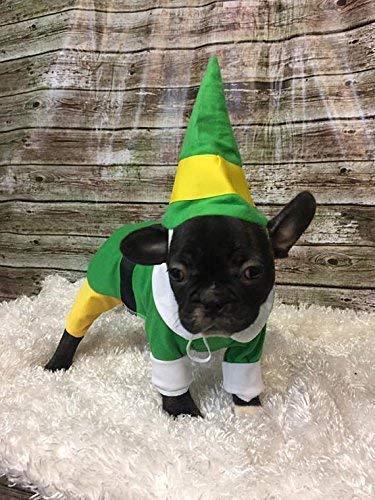 Small Buddy the Elf Dog