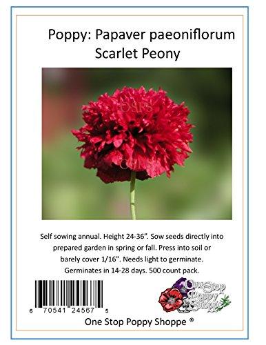 (500 Poppy Flower Seeds. Scarlet Peony Poppies. One Stop Poppy Shoppe® Brand.)