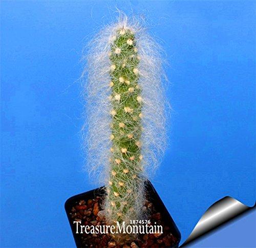 Time-Limit!!Cactus Flowers 100pcs Cactus plant seed Rare plant seeds Foliage magical garden & home Semillas Flora,#M9C213