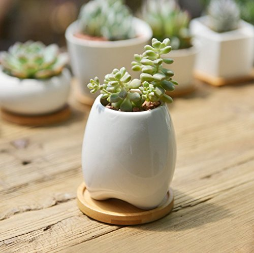 sun-e-modern-white-ceramic-succulent-planter-pots-mini-flower-plant-containers-with-bamboo-saucers-o