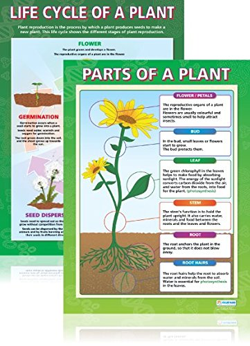 Plants Poster Set - Pack of 2 | Science Classroom Posters | Laminated Gloss Paper measuring 33