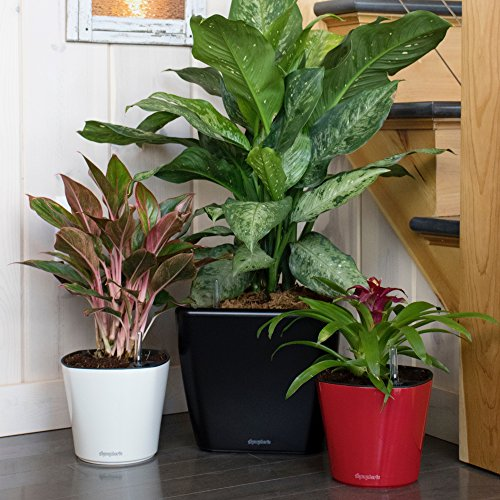 """Aquaphoric Self Watering Planter (11"""") + Fiber Soil = Foolproof Indoor Home Garden. Modern Decorative Planter Pot for All House Plants, Flowers, Herbs, Vegetables, Tropical. Easy / Looks Great."""