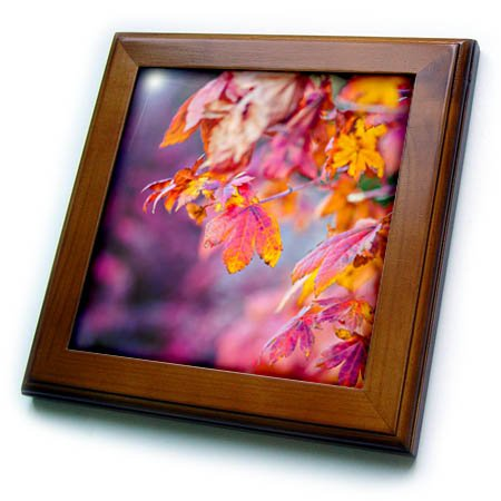 3dRose Alexis Photography - Seasons Autumn - Yellow and orange maple leaves. Dark purple background - 8x8 Framed Tile (ft_270386_1) -