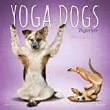 img - for Yoga Dogs Together 2020 12 x 12 Inch Monthly Square Wall Calendar by Plato, Animals Humor Dog book / textbook / text book