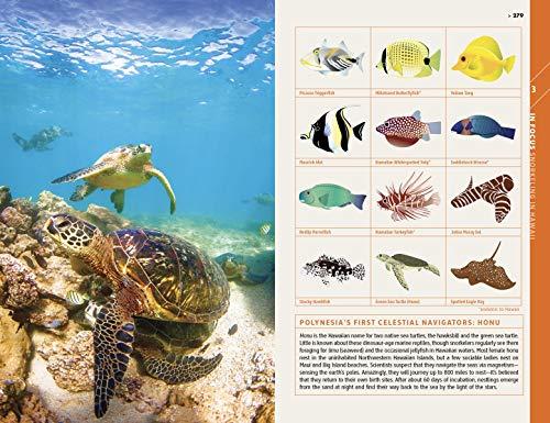 51UMUNoN15L - Fodor's Essential Hawaii (Full-color Travel Guide)