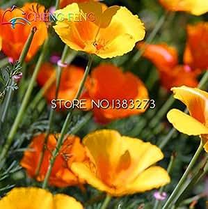 Los más vendidos !!! Semillas Semillas 100pcs de fascinación Eschscholtzia hermosa flor de Bonsai para el jardín