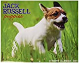 Jack Russell Puppies 2015 Wall Calendar