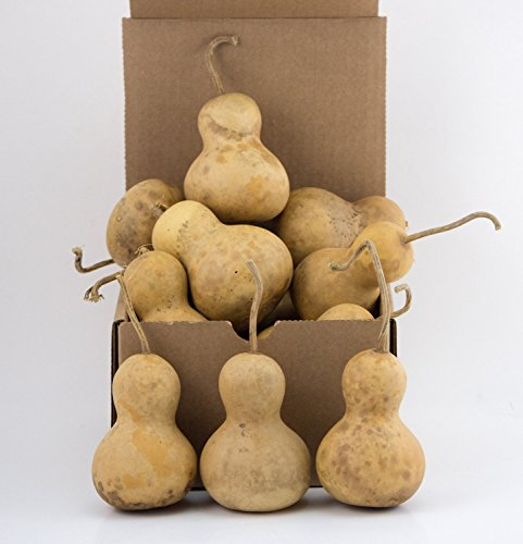 Snowman gourds Mini Bottle dried gourds Perfect for - Craft Bottle Snowman