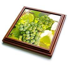 Danita Delimont - Grapes - Grape vines at Mission Hill Family Estate, Canada. - 8x8 Trivet with 6x6 ceramic tile (trv_205913_1)