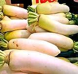 MySeeds.Co Japanese Daikon Daikon Radish Seeds - Japanese Radish FRESH SEEDS - Fast Growth ONLY 40-50 Days to Harvest - MAKES EXCELLENT RADISH SALAD - By (00050 Seeds - 50 Seeds - Pkt Size)