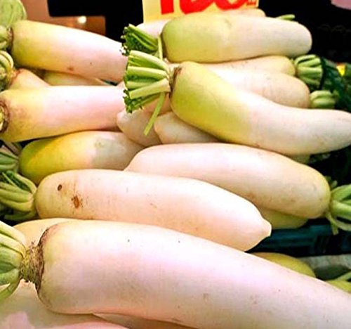 MySeeds.Co Japanese Daikon Daikon Radish Seeds - Japanese Radish FRESH SEEDS - Fast Growth ONLY 40-50 Days to Harvest - MAKES EXCELLENT RADISH SALAD - By (00050 Seeds - 50 Seeds - Pkt Size) ()