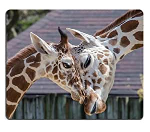 giraffes animals love zoo family Mouse Pads Customized Made to Order Support Ready 9 7/8 Inch (250mm) X 7 7/8 Inch (200mm) X 1/16 Inch (2mm) High Quality Eco Friendly Cloth with Neoprene Rubber Liil Mouse Pad Desktop Mousepad Laptop Mousepads Comfortable Computer Mouse Mat Cute Gaming Mouse pad