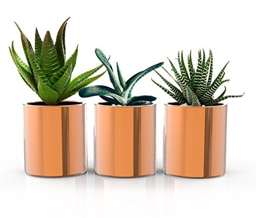 STRATFIELD HOME DESIGN Copper Succulent Plant Pots - Premium Set of 3 Mini Indoor Planters - Perfect home decor for succulents, cactus plants, and herb gardens! by STRATFIELD HOME DESIGN
