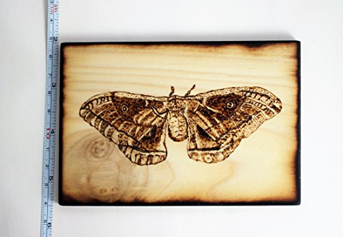 Wood Burned Polyphemus Moth Pyrography Small Woodburned Nature Insect Picture by Hendywood (Image #7)