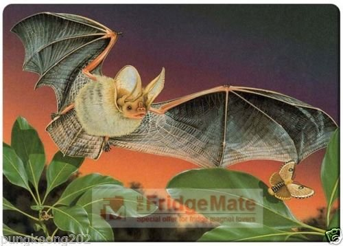 Big bat and butterfly fridge magnet 3 1/2