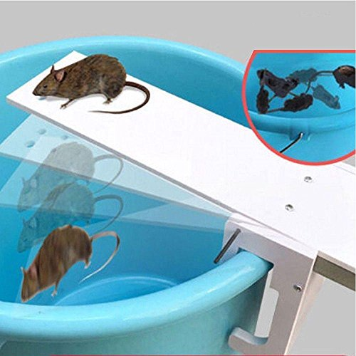 Pushhr Auto Reset Rat Mice Seesaw Traps Mousetrap Bait Catcher Walk Plank by Pushhr