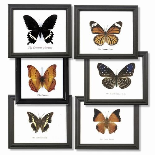 6 Assorted Butterfly Specimens On Cotton Backed Wooden Frame
