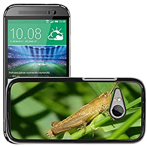 Hot Style Cell Phone PC Hard Case Cover // M00116860 Grasshopper Macro Insect Grasshoppers // HTC One Mini 2 / M8 MINI / (Not Fits M8)