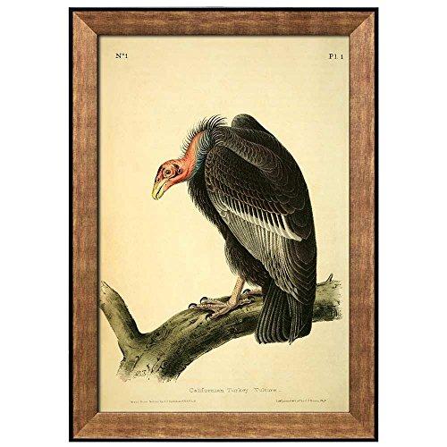 Beautiful Illustration Inside of an Elegant Frame of a Californian Turkey Vulture by John James Audubon Framed Art