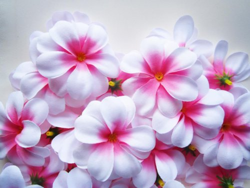 Silk Plumeria Flowers: Amazon.com