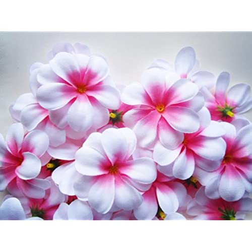 Silk plumeria flowers amazon 100 white hawaiian plumeria frangipani silk flower heads 3 artificial flowers head fabric floral supplies wholesale lot for wedding flowers mightylinksfo