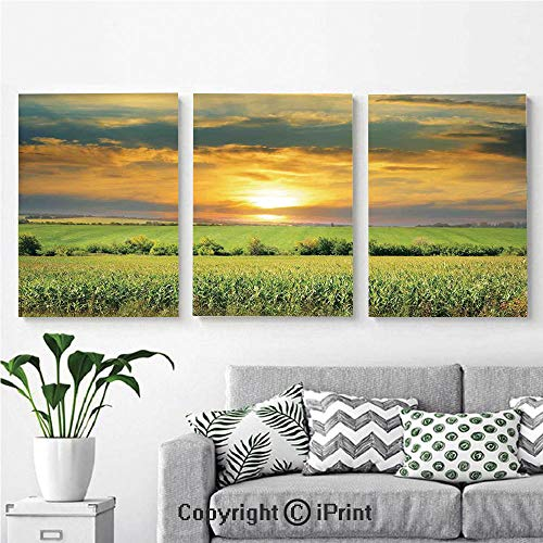 Bird Of Paradise Natural Wood - Modern Gallery Wrapped Canvas Print Corn Field and Sunrise on Summer Sky Natural Paradise Pasture Mourning View Picture 3 Panels Pictures on Canvas Wall Art Ready to Hang for Living Room Kitchen Home