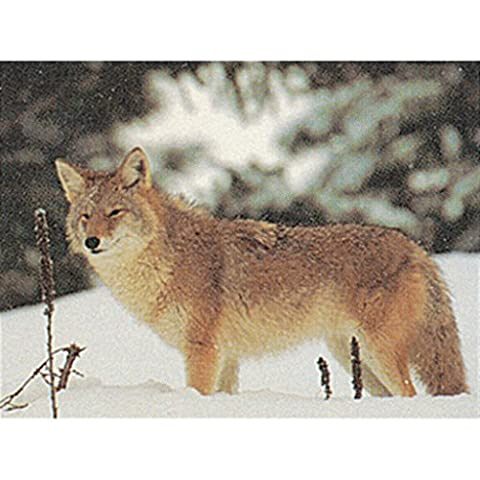 Delta Tru - Life Eastern Series Small Game - Coyote - Coyote Target
