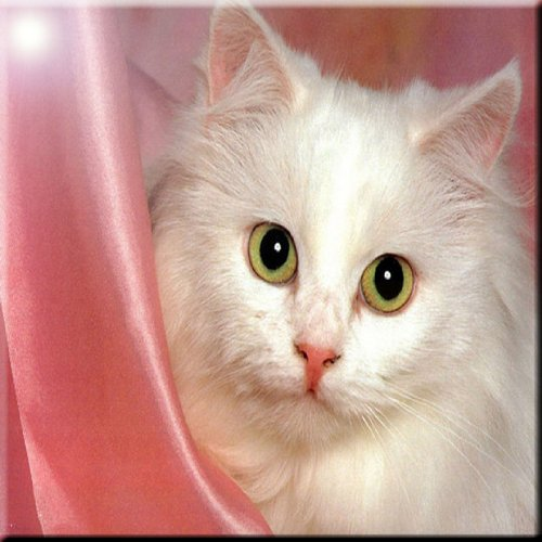 8 x 8 Rikki Knight Cat on Pink Satin Design Ceramic Art Tile