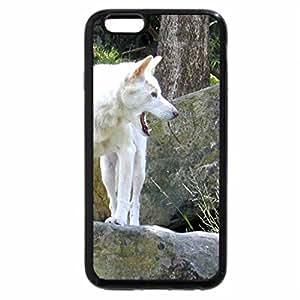 iPhone 6S / iPhone 6 Case (Black) Rare White Dingo
