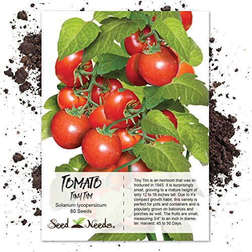 Seed Needs, Tiny Tim Tomato (Lycopersicon esculentum) 80 Seeds Non-GMO