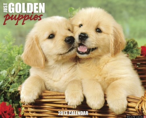 Golden Puppies 2013 Wall Calendar (Just (Willow Creek))