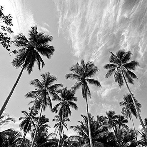 Coastal Decor Beach Black and White Palm Tree and Sky Print or Canvas