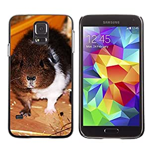Just Phone Cases Etui Housse Coque de Protection Cover Rigide pour // M00128680 Rex Guinea Pig mascotas joven Fluffy // Samsung Galaxy S5 S V SV i9600 (Not Fits S5 ACTIVE)